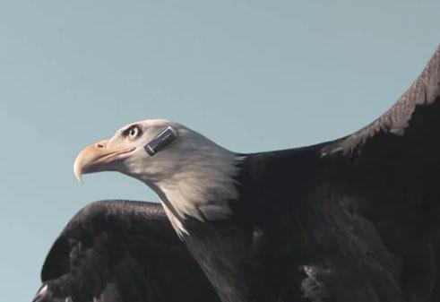 eagle-bt-headset